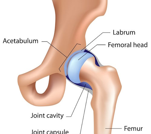 hip labrum anatomy